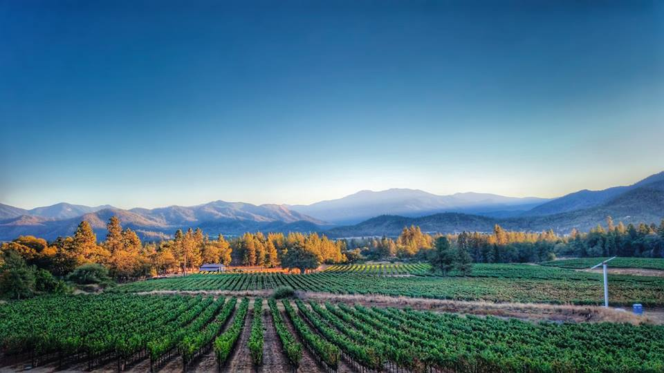 Serra Vineyards