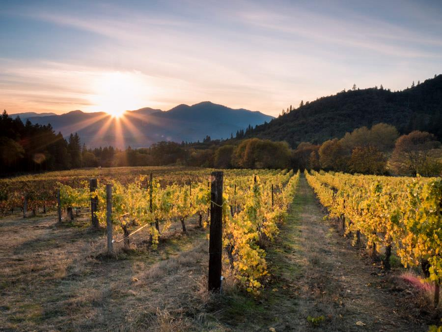 Wooldridge Creek Winery